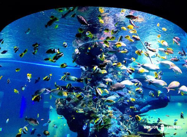 S.E.A Aquarium(シー・アクアリウム)の回遊水槽