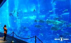 S.E.A Aquarium(シー・アクアリウム)の巨大水槽オーシャン・ギャラリー