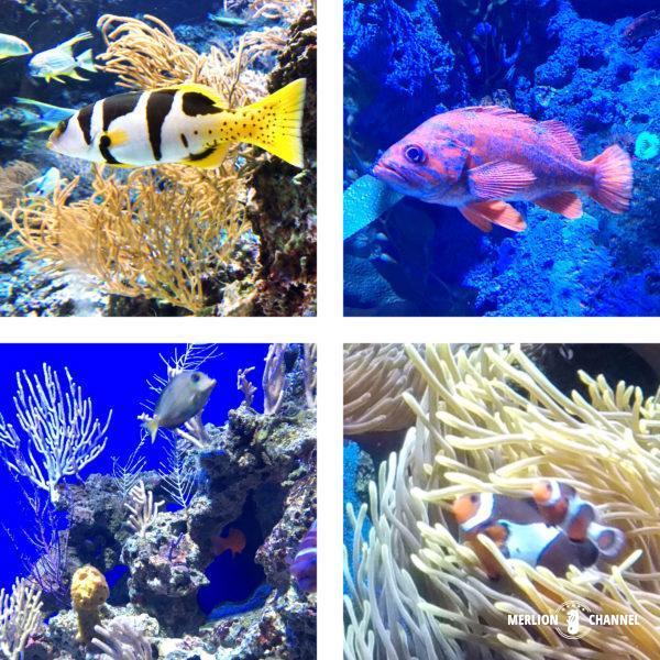S.E.A Aquarium(シー・アクアリウム)のカラフルな熱帯魚や海水魚たち