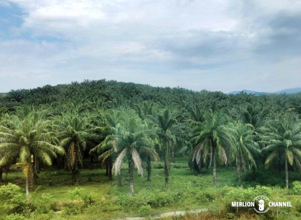 パームツリーの大農場も見納め