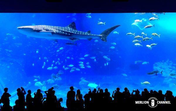 沖縄美ら海水族館の大水槽
