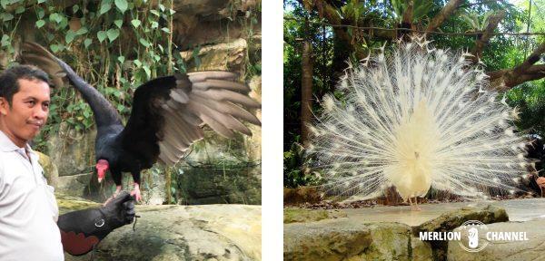 シンガポール動物園の「レインフォレスト・ファイトバック」ショー