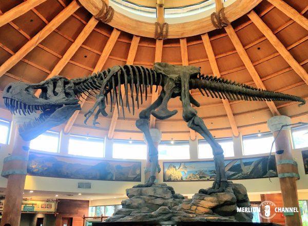 ユニバーサルスタジオ・シンガポール(USS)の「Discovery Food Court」恐竜標本